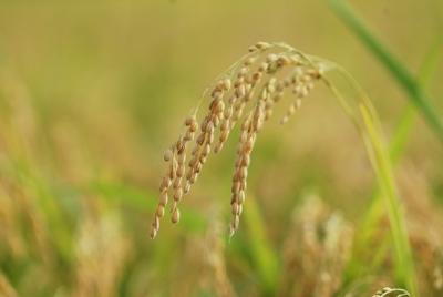 농업의 새로운 미래를 위해 우선 이행해야 할 공약 5가지