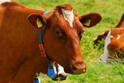 광우병 발병한 미국산 쇠고기 수입 즉각 중단하라