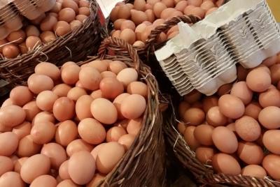 계란 밀집 사육 방식을 청산하고 유기축산을 확대하라