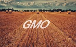 캐나다산 GMO밀 유통 중단에 대한 경실련 입장