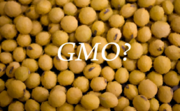 GMO 공인검사 현황 분석결과