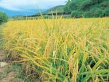 정부의 쌀 재협상 과정에서 드러난 7가지 문제점