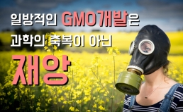 GMO표시기준 시행과 국산 GMO농산물 본격개발에 대한 입장