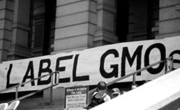 전 세계 GMO표시제도 등 개선 동향 보도자료