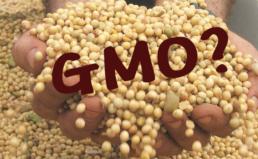 GMO대두 비의도적 혼입치 실태조사 결과발표
