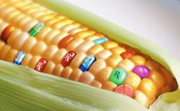 GMO 수입현황에 대한 정보공개 청구